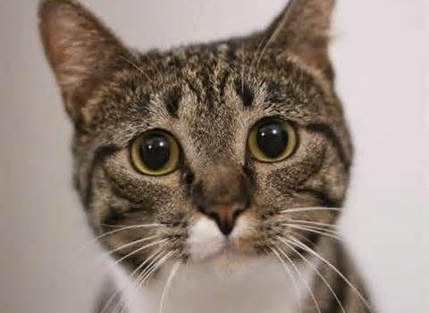 Вирусный конъюнктивит кошек