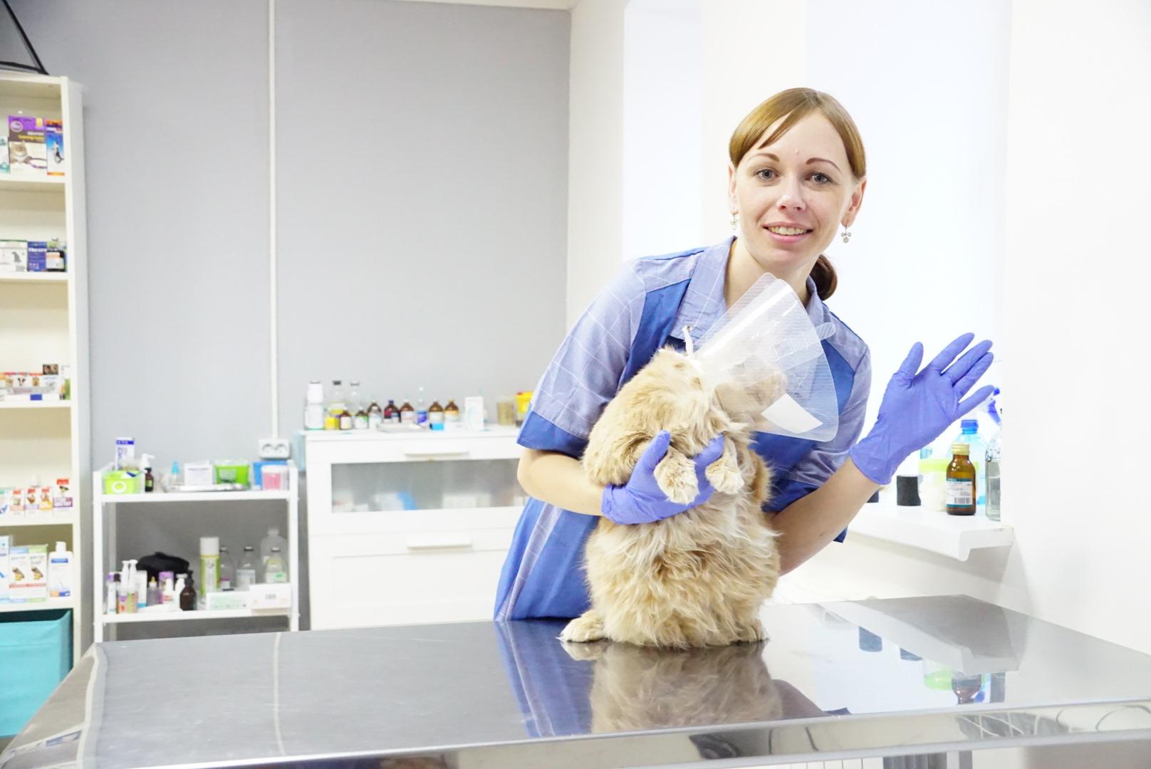Ветеринарная клиника Бона Кэти городах Артем и Фокино