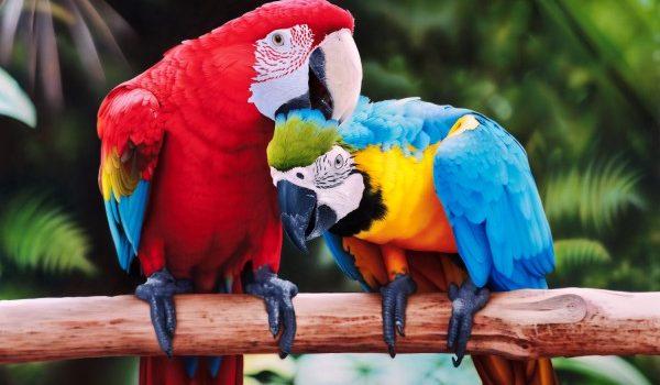 Курс орнитологии
